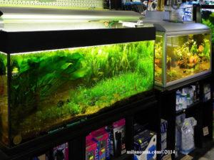 Animal-Garden-Toelettatura-Alimenti-Naturali_www.milanomia.com_www.milanomia2.com (11)